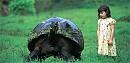 rùa khổng lồ trên quần đảo Galapagos, Ecuador, nam Mỹ